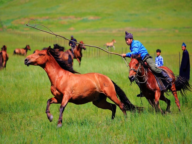 享游学|2019内蒙古夏令营