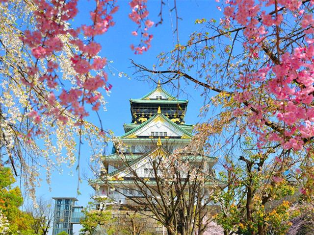 享游学亲子游丨2020W日本亲子滑雪及文化体验6天