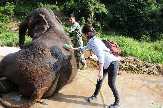 2020西双版纳野象保护和雨林保护之旅