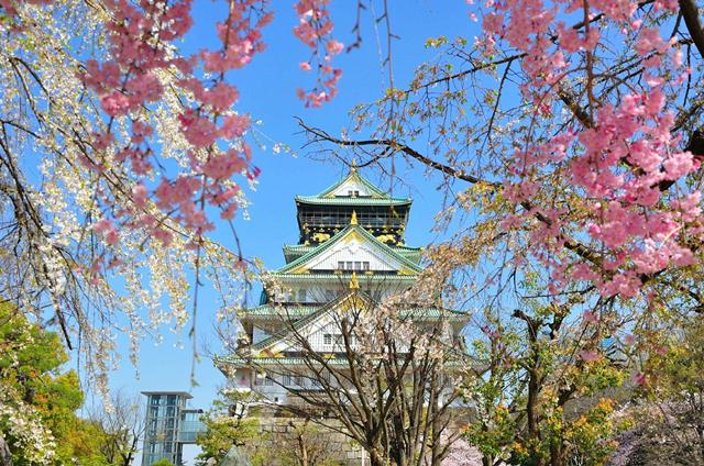 大阪城 网站尺寸.png